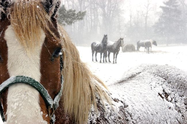 horses-in-freezing-cold-conditions-in-snow1
