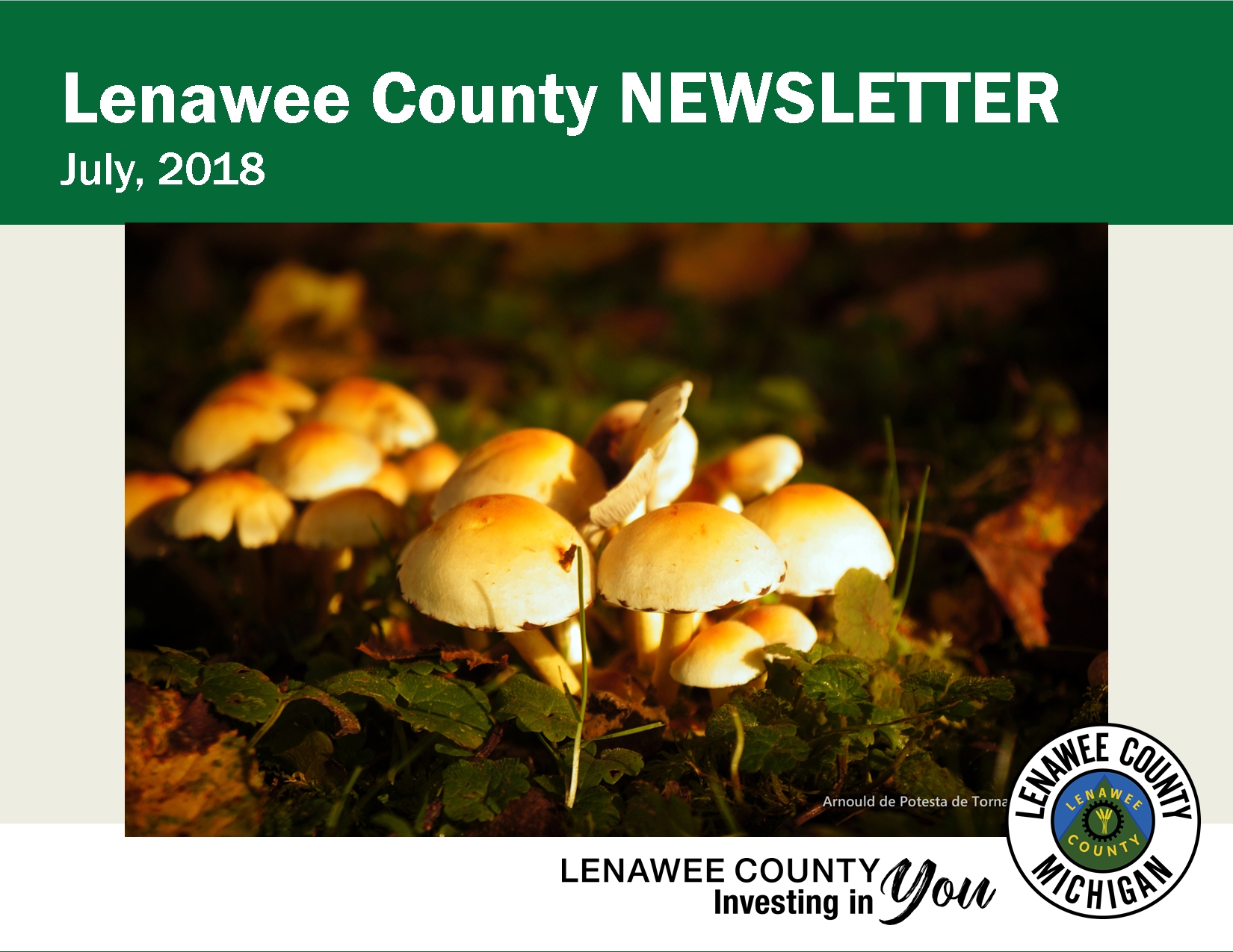 July Newsletter - mushrooms
